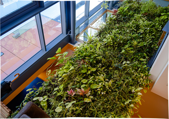 An indoor <strong>living wall</strong>