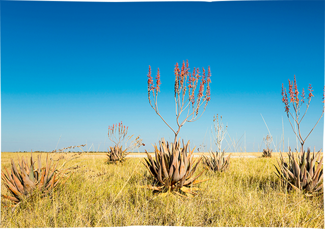 Over 400 kinds of <strong>aloes</strong>!